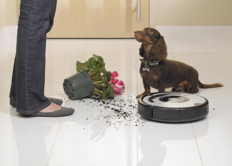 Пылесос для кухни, собака, ноги человека, упавший цветочный горшок