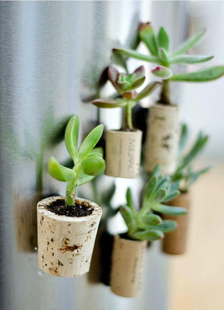 магнит с живым растением на холодильнике